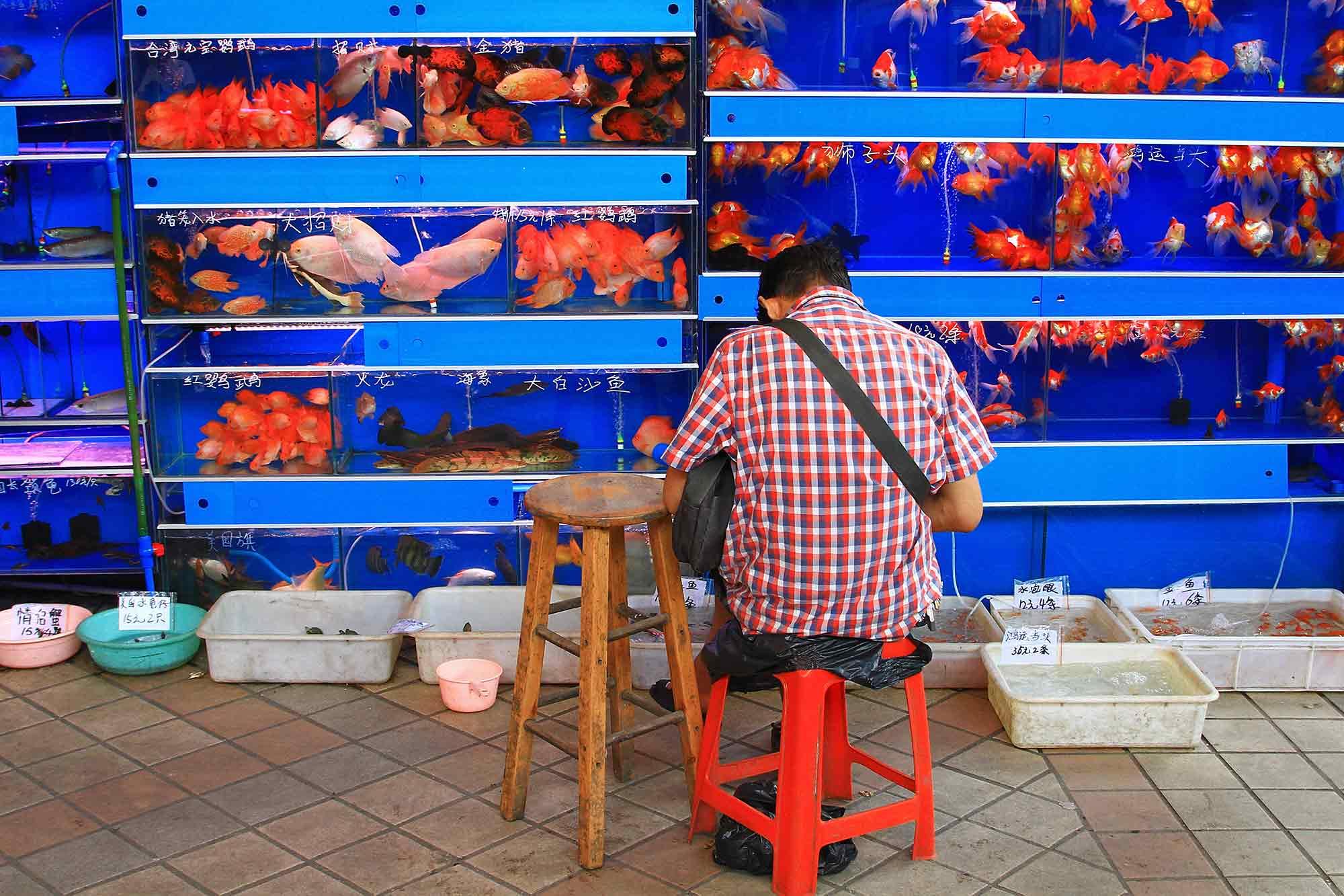 Goldfish at an animal market in Guangzhou, China. © Ulli Maier & Nisa Maier