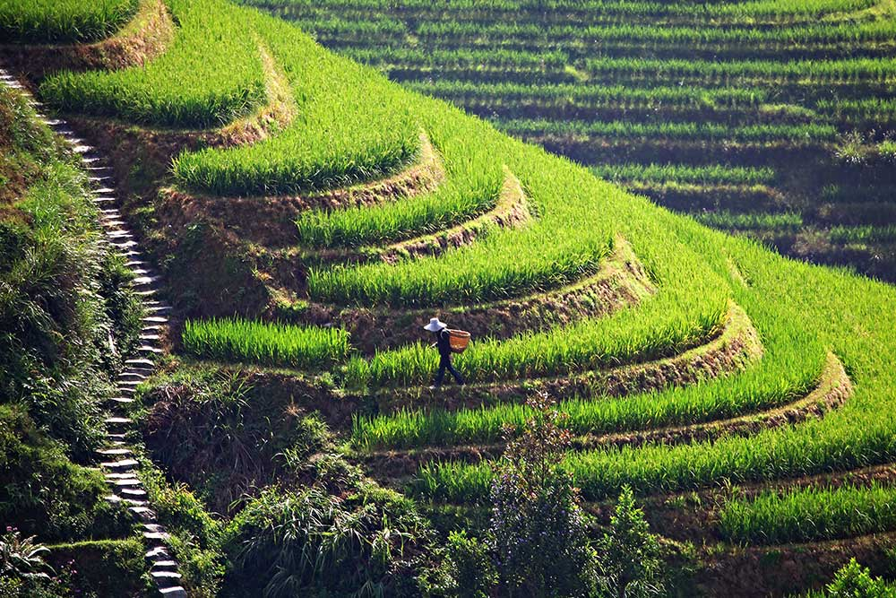 Dragon 39 s backbone rice terraces in guanxi china travel for What are terraces
