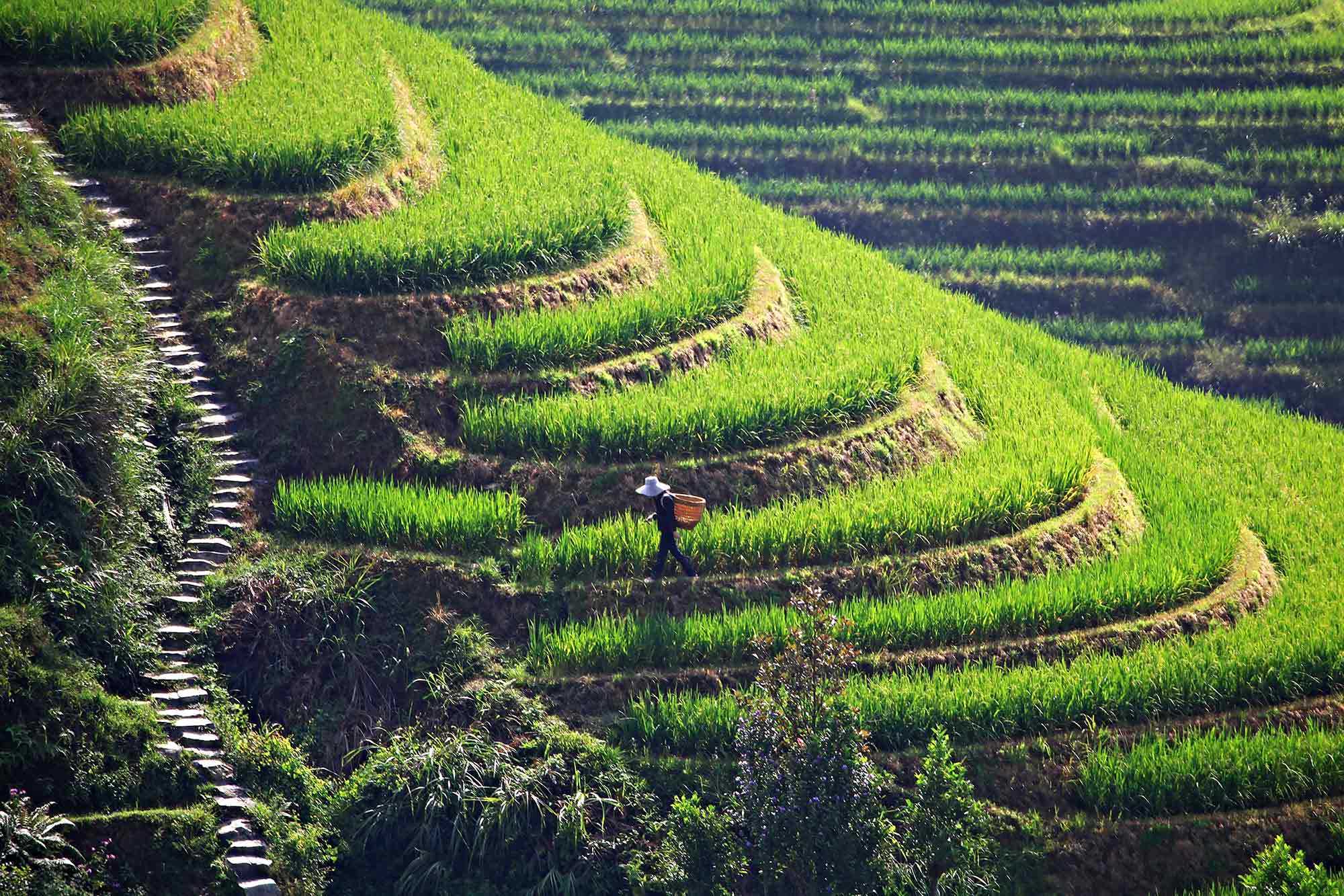 Dragon S Backbone Rice Terraces In Guanxi China Travel