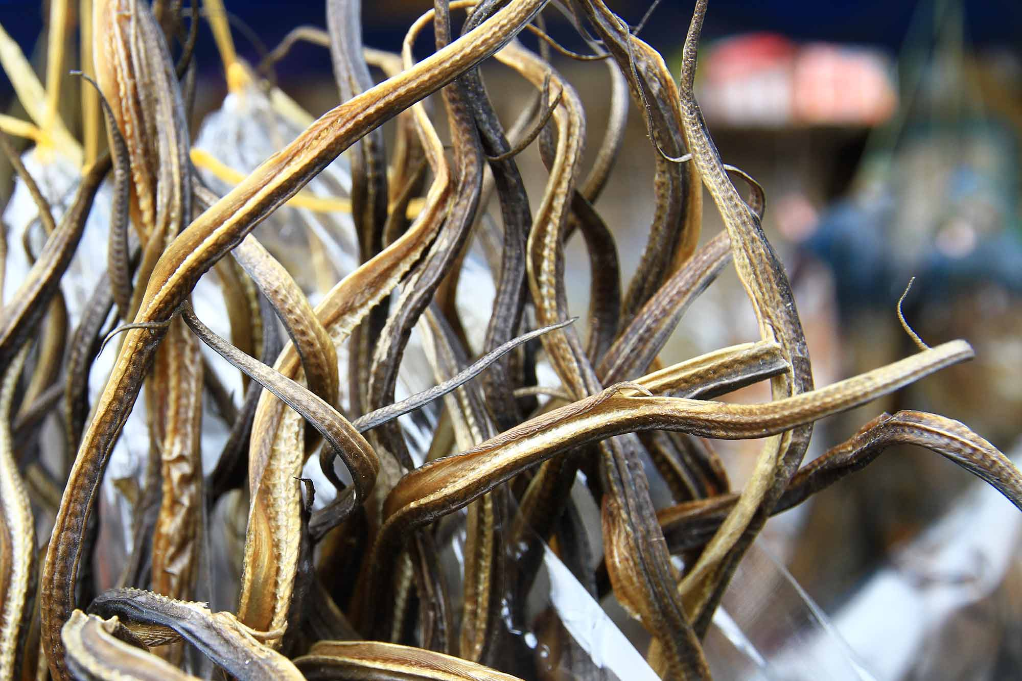 Dried snakes at a market in Bukittinggi, Sumatra. © Ulli Maier & Nisa Maier