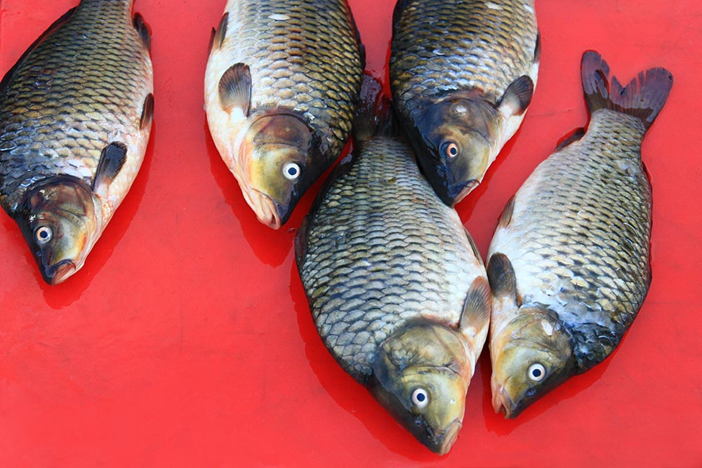fish-at-a-market-in-laos-featured