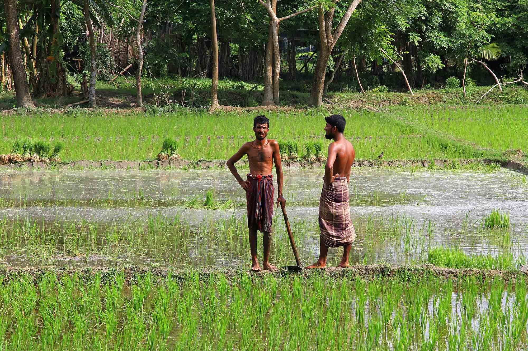Men working in the rice fields of Galachipa. © Ulli Maier & Nisa Maier
