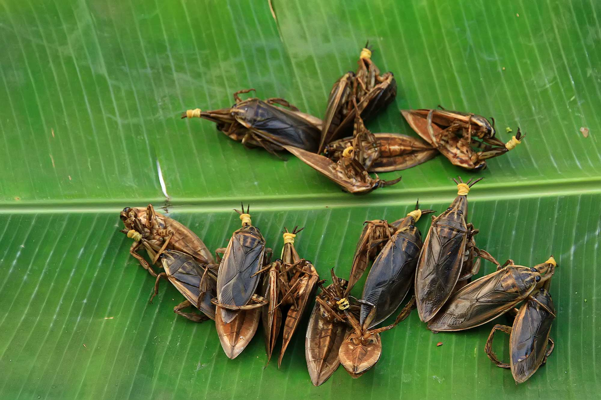 Crickets at a market in Vientiane, Laos. © Ulli Maier & Nisa Maier