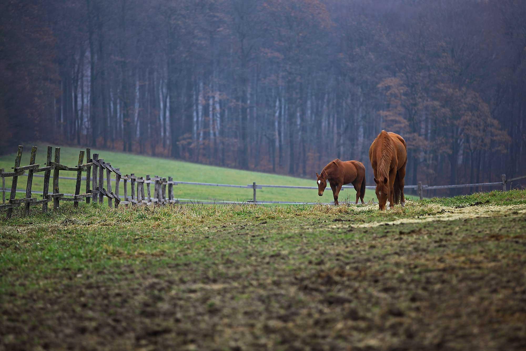 Horses. © Ulli Maier & Nisa Maier