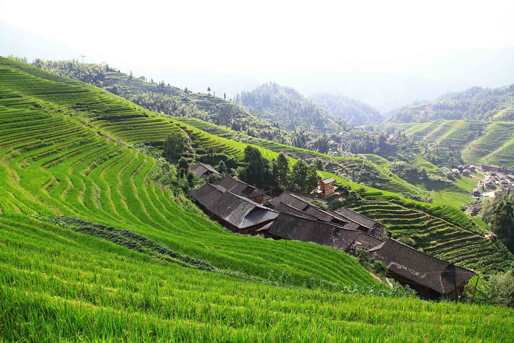 longji-rice-terrace-dazhai-dragon-backbone-china-5