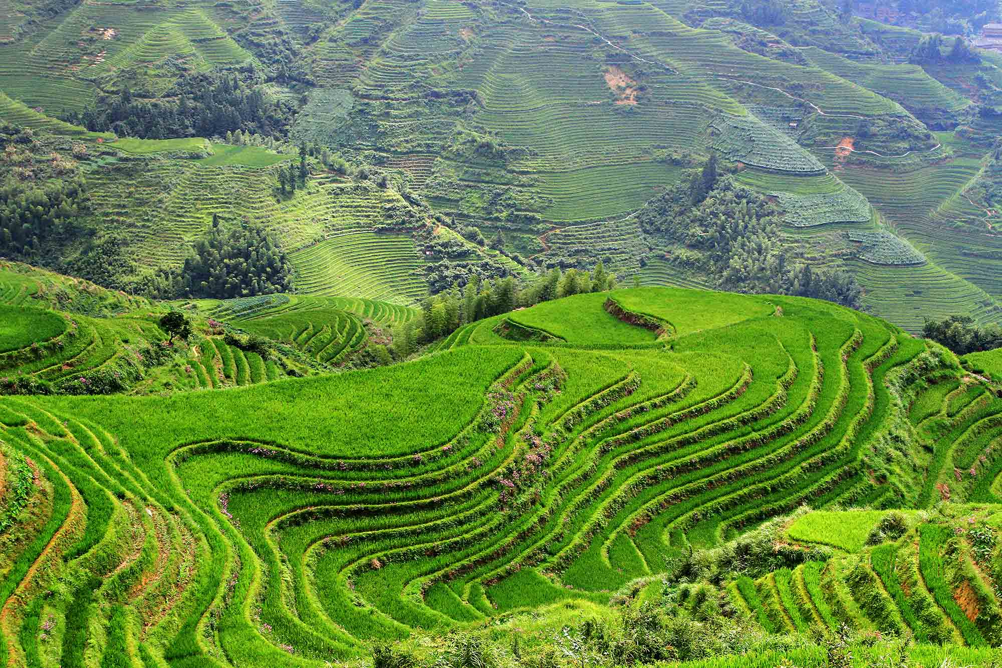 longji-rice-terraces-guangzhi-longsheng-county-1