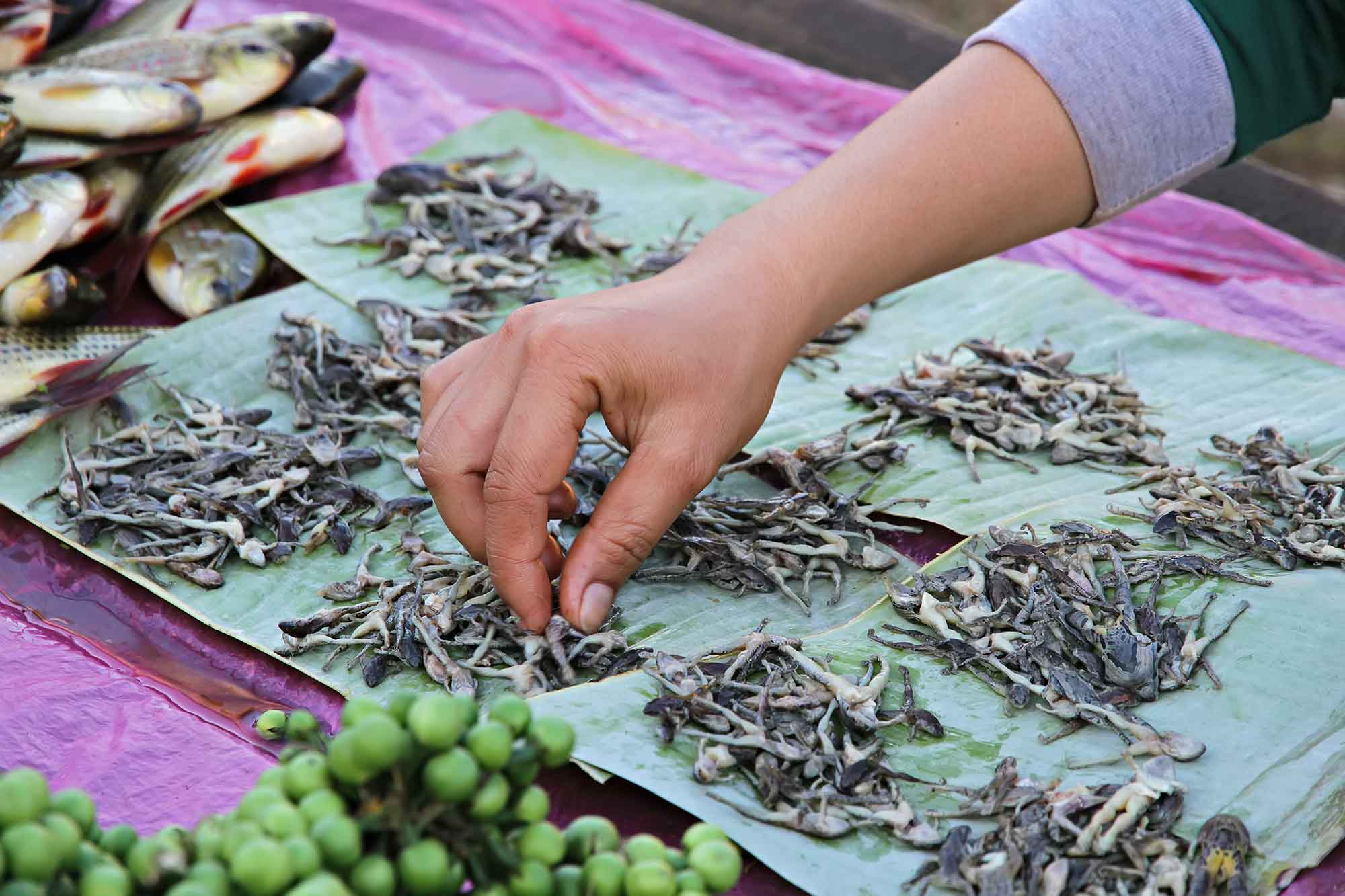 market-vientiane-laos-little-dead-frogs