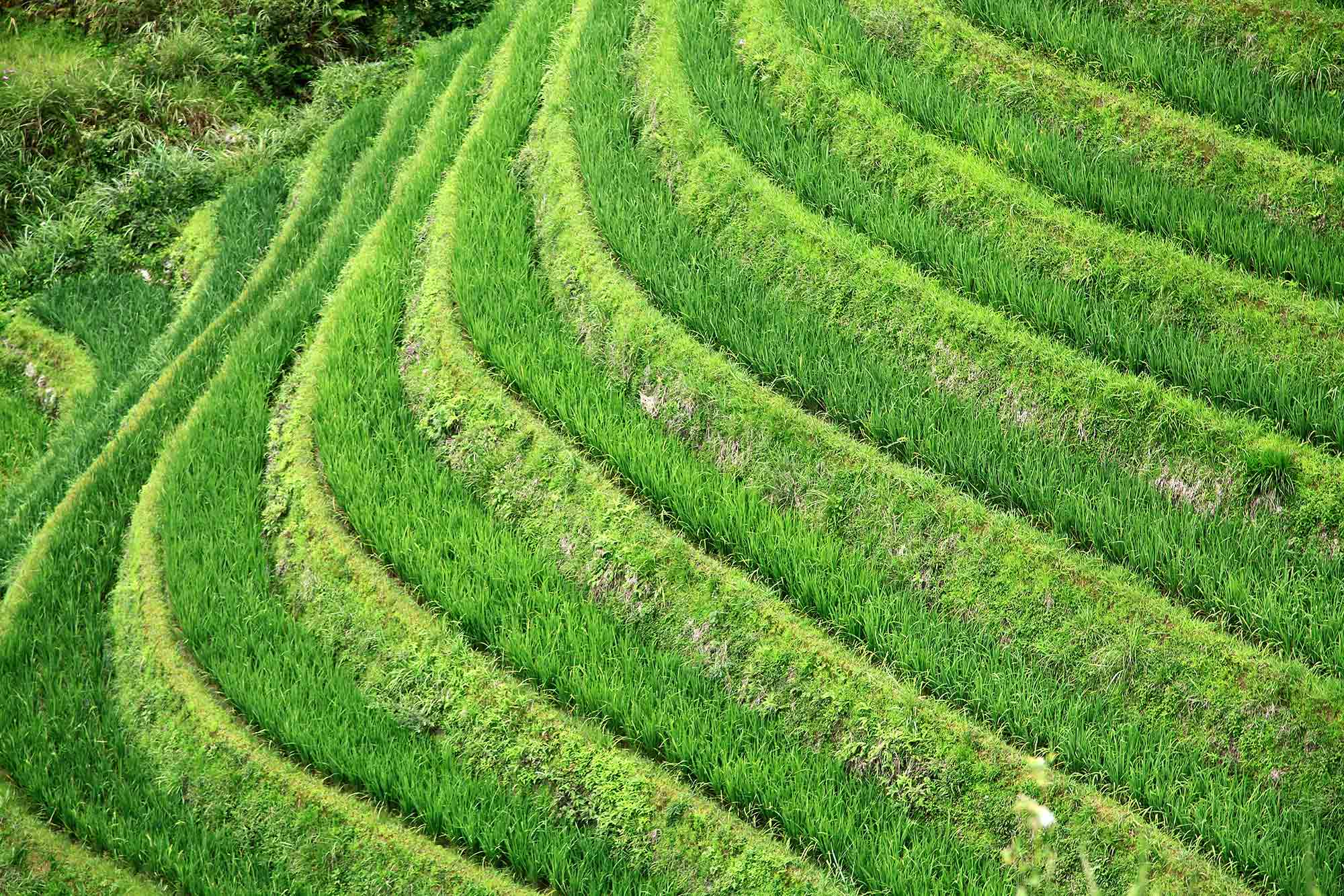 rice-fields-dazhai-china-dragons-backbone