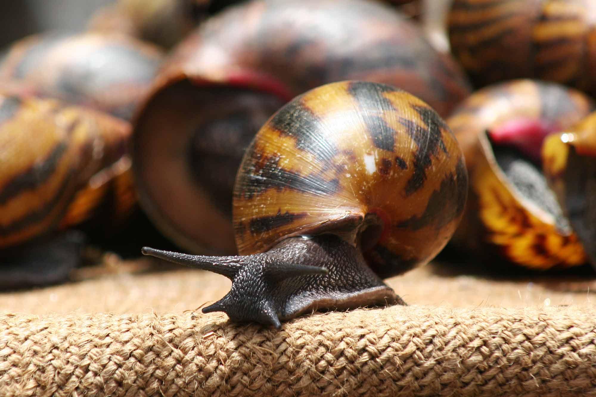 snails-market-accra-ghana-africa