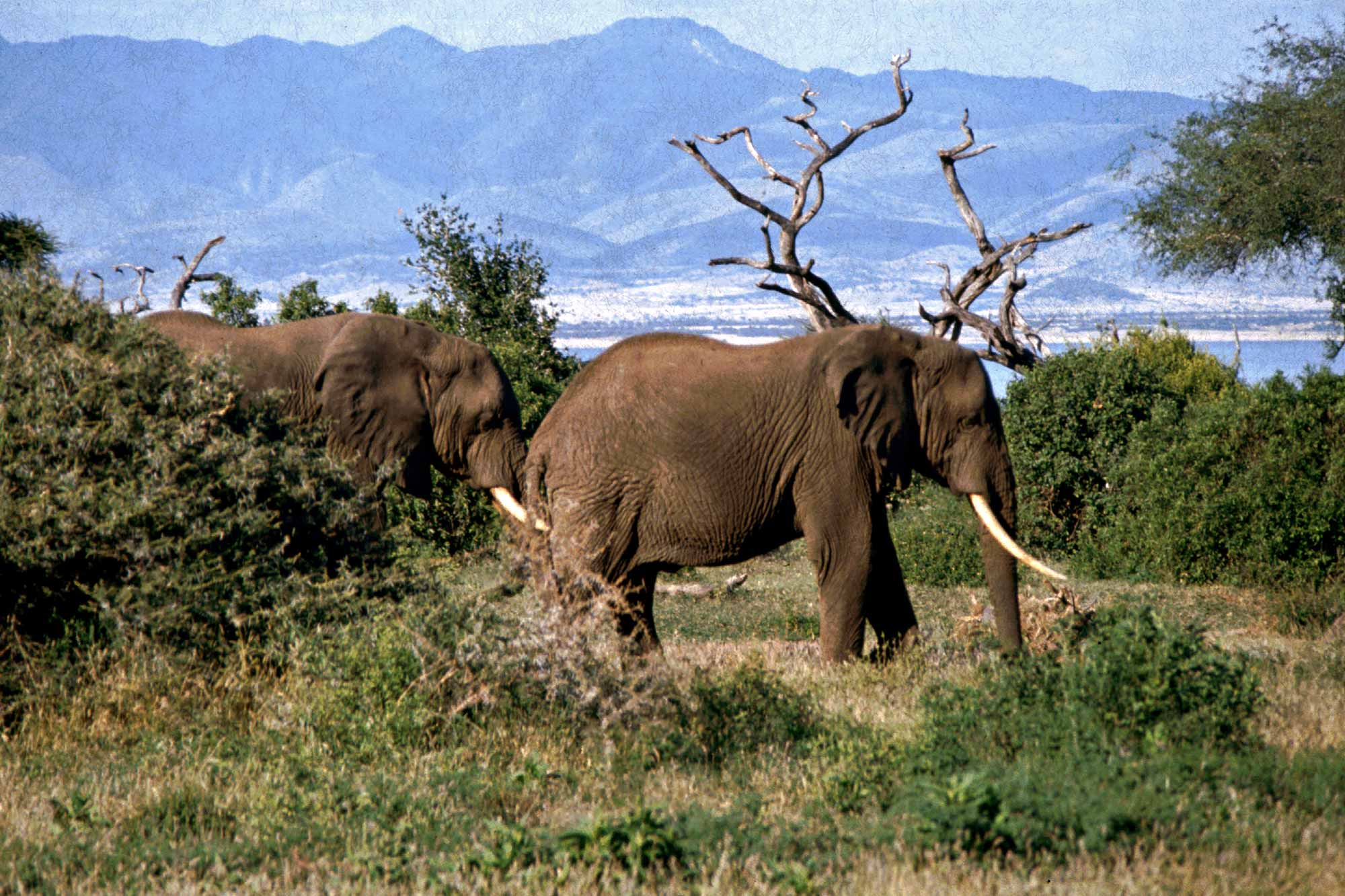 tanzania-lake-manyara-national-park-elephants-africa