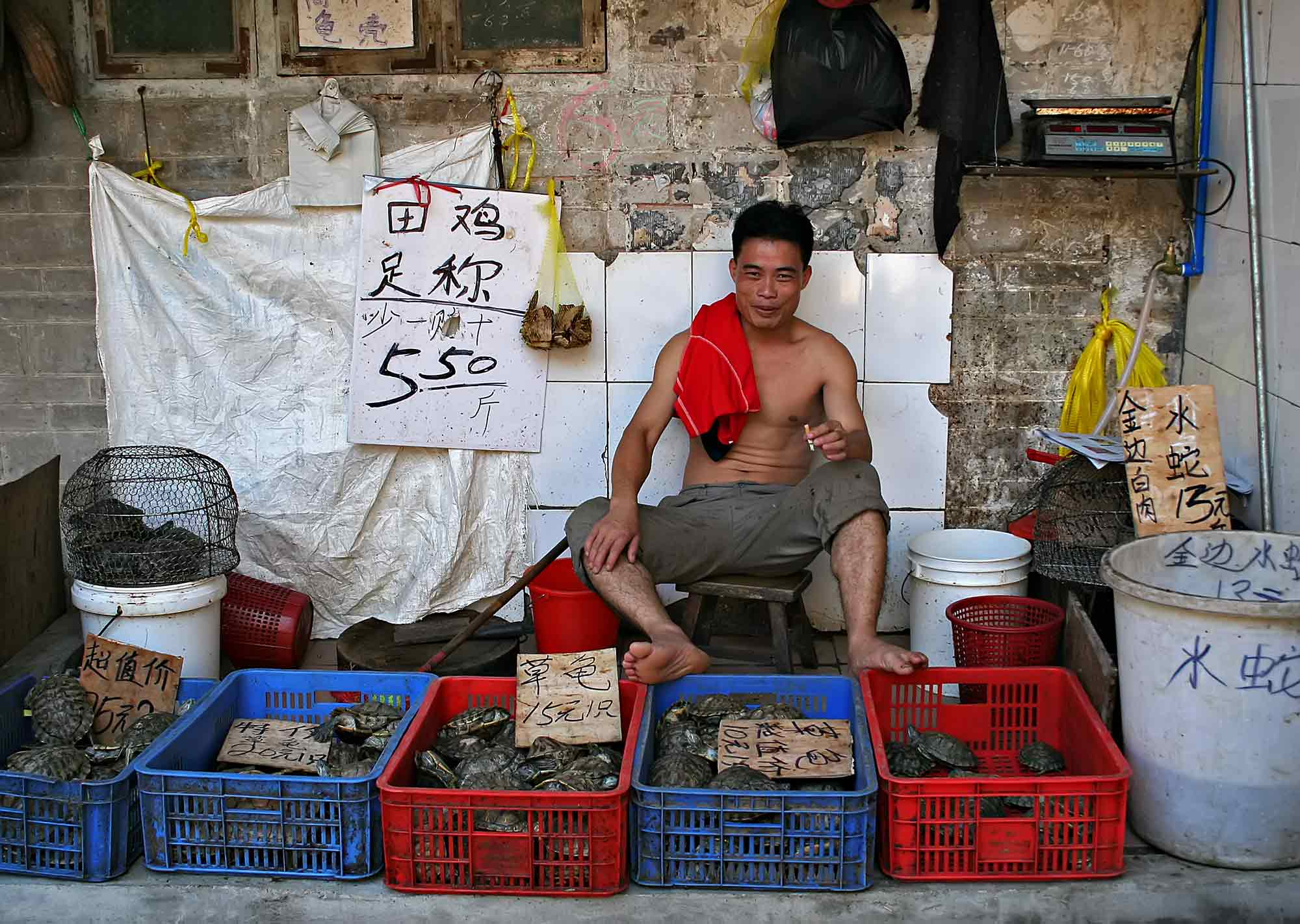 A turtle seller in Guangzhou, China. © Ulli Maier & Nisa Maier
