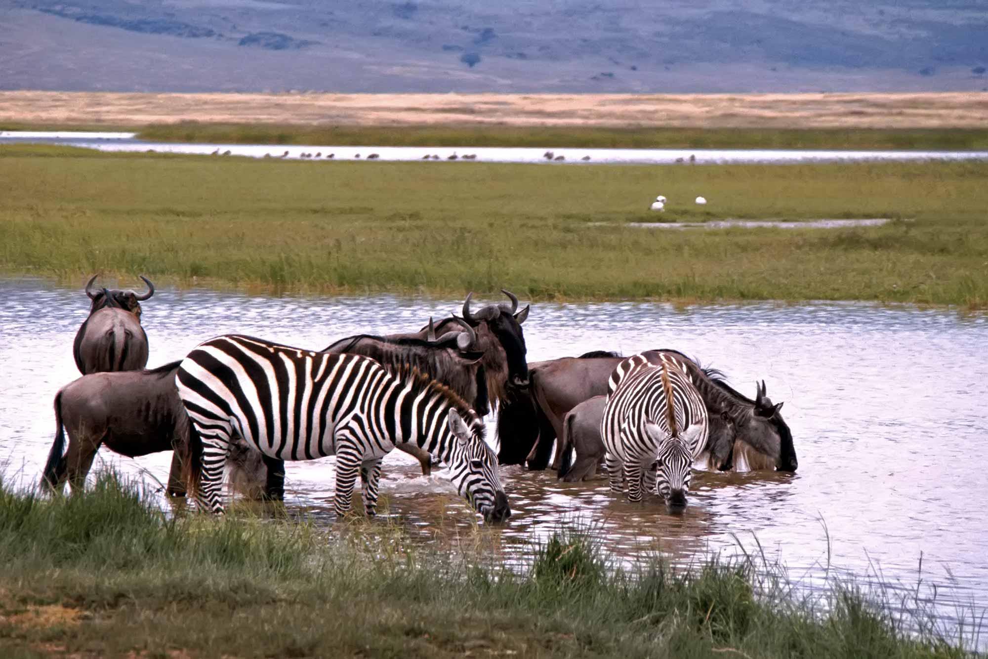 wild-animals-serengeti-kenya-africa