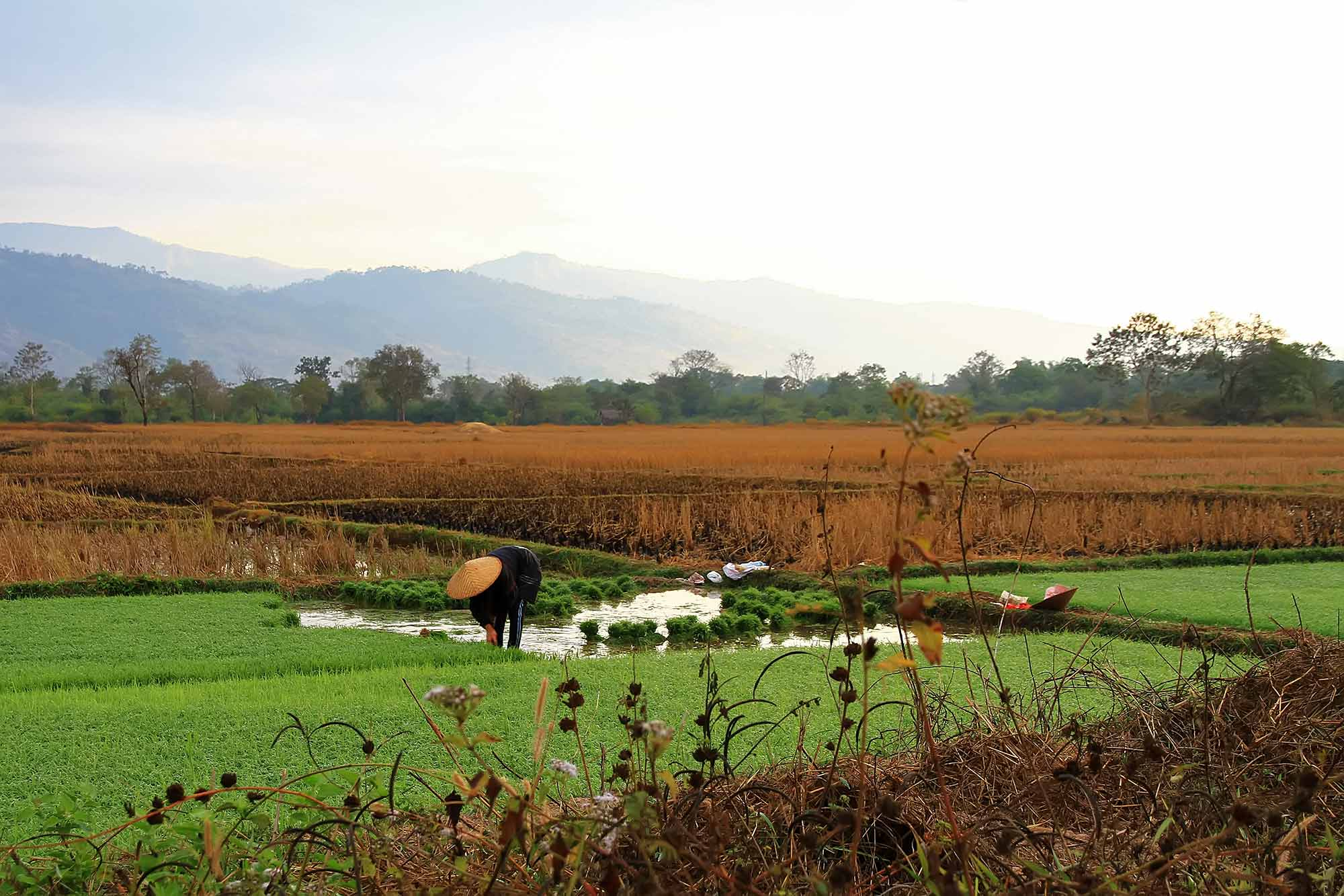working-in-rice-fields-laos