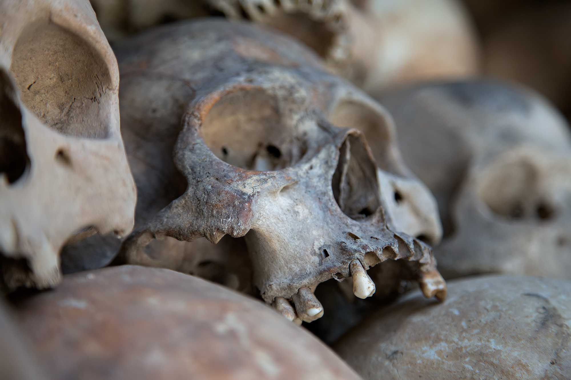 Human skulls at the Killing Fields outside of Phnom Penh, Cambodia. © Ulli Maier & Nisa Maier