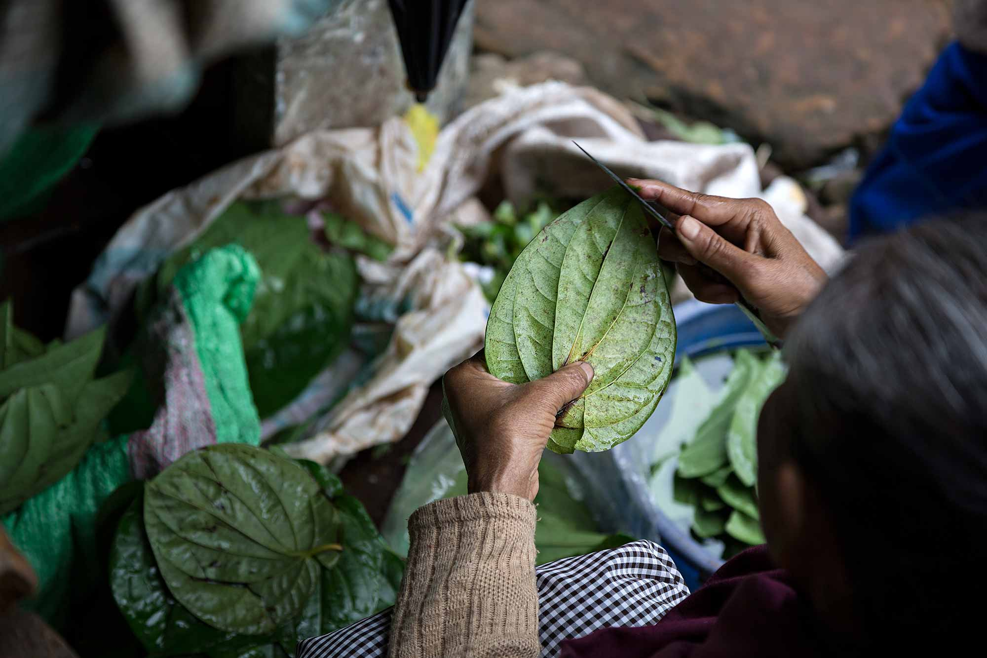 Woman cutting betel leaves at a market in Guwahati, India. © Ulli Maier & Nisa Maier