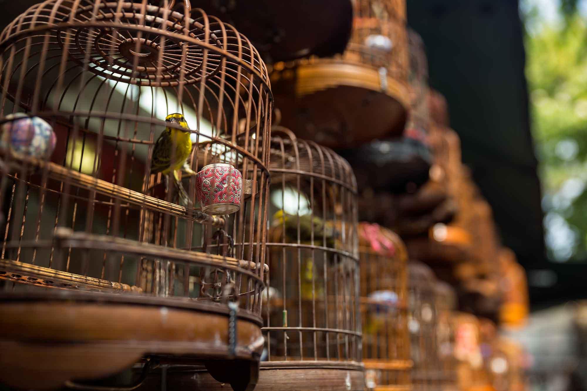 At the bird market in Mong Kok, Hong Kong. © Ulli Maier & Nisa Maier