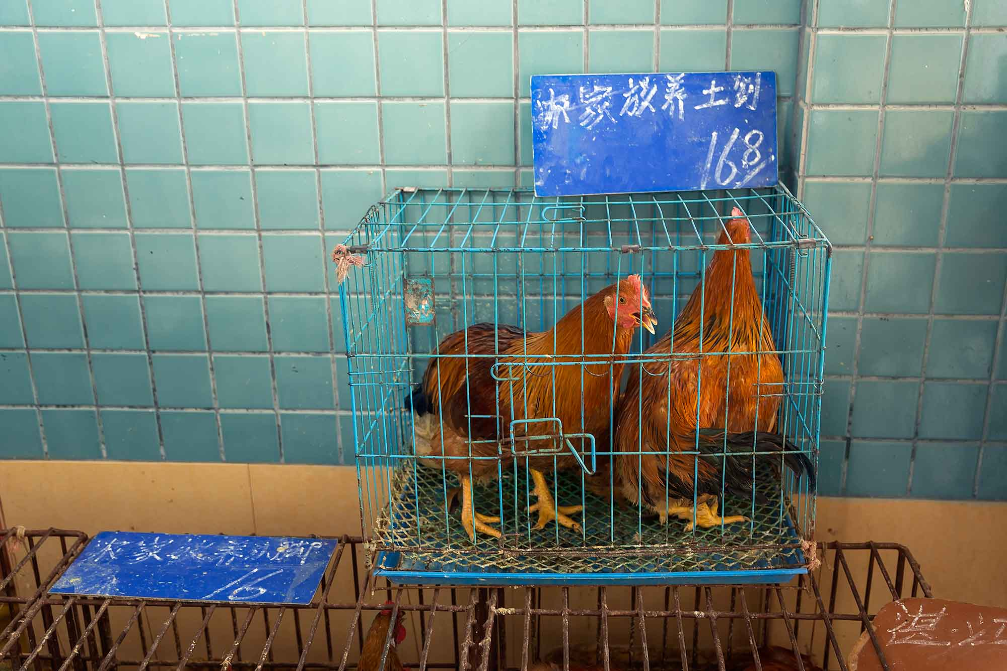 A caged rooster at a market in Guangzhou. © Ulli Maier & Nisa Maier