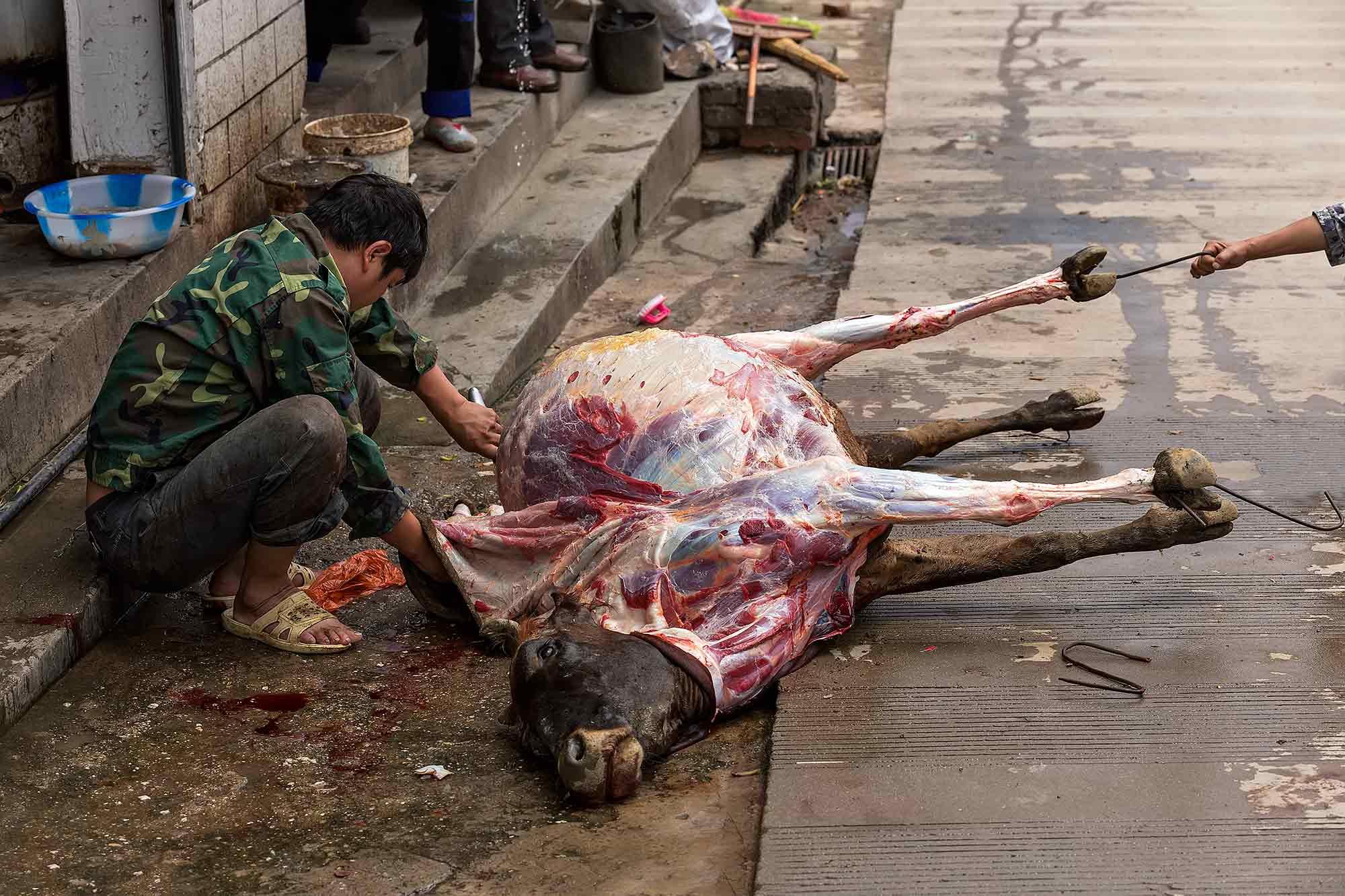 Skinning a cow in Duoyishu, Yunnan. © Ulli Maier & Nisa Maier