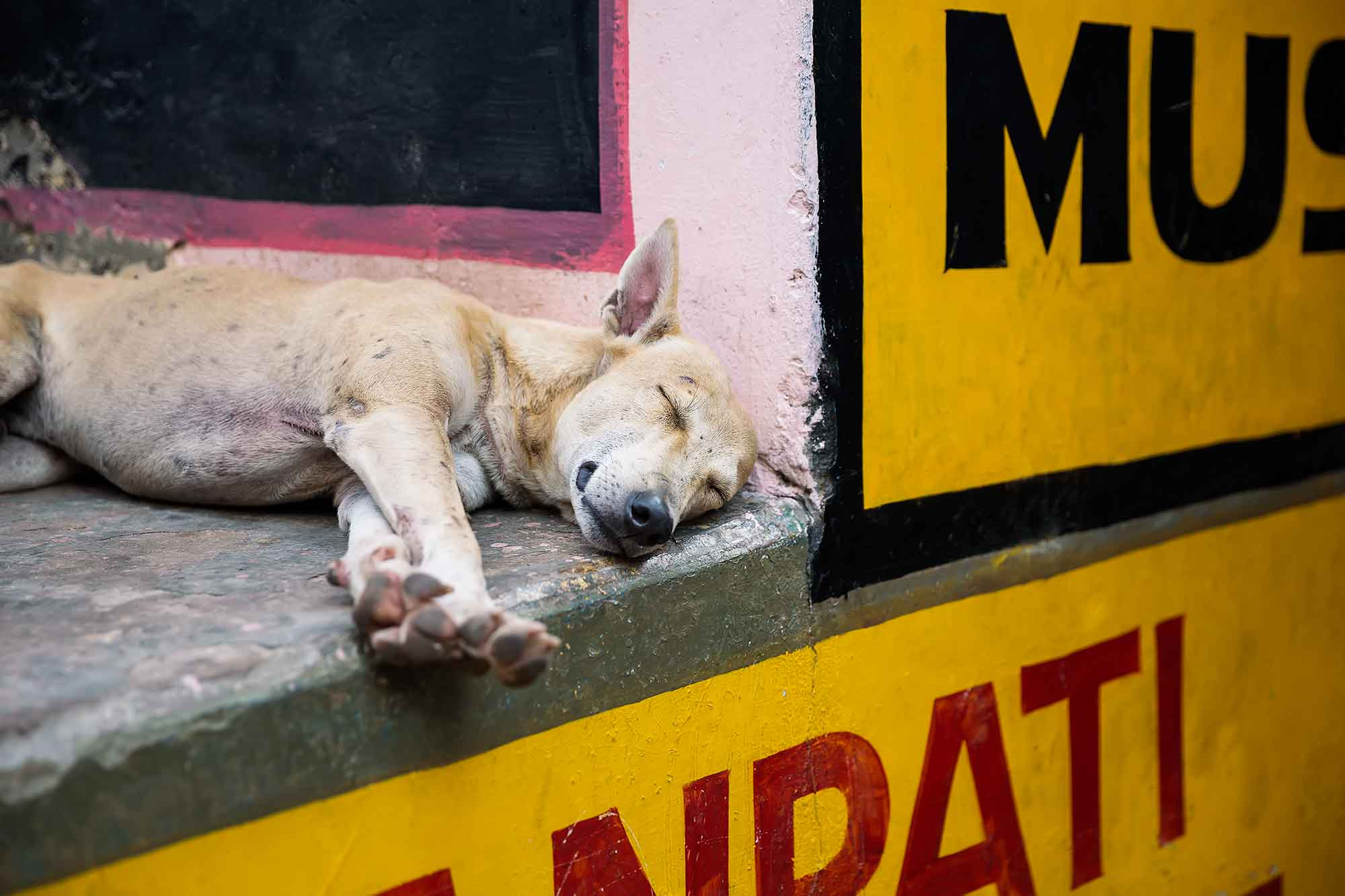 sleeping-dog-streets-varanasi-india