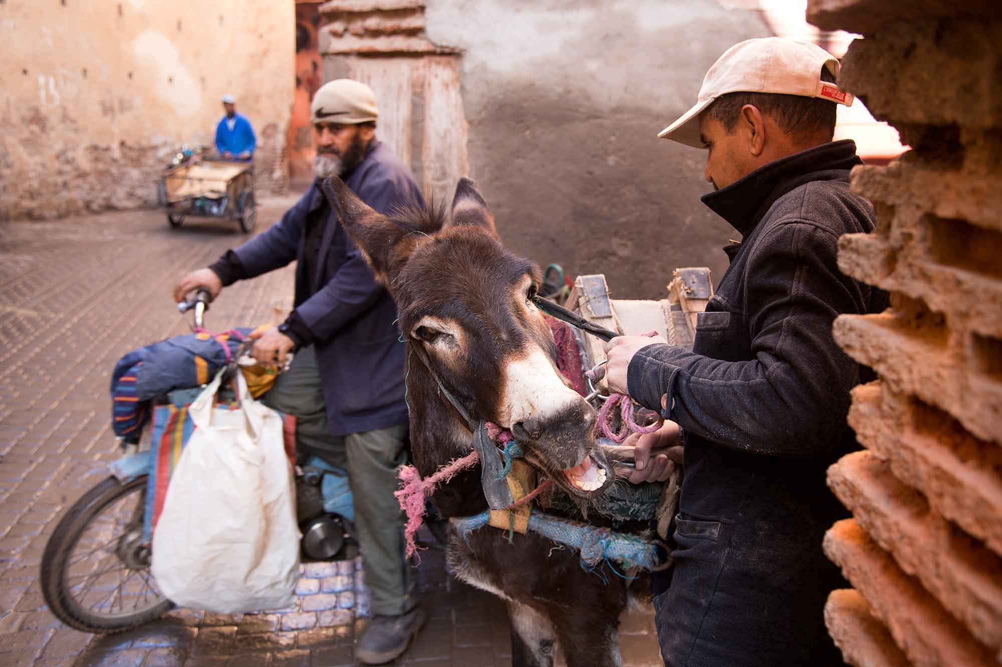 Donkeys are very important to the locals in Morocco, whether in a small town or in the centre of Marrakech. © ULLI MAIER & NISA MAIER