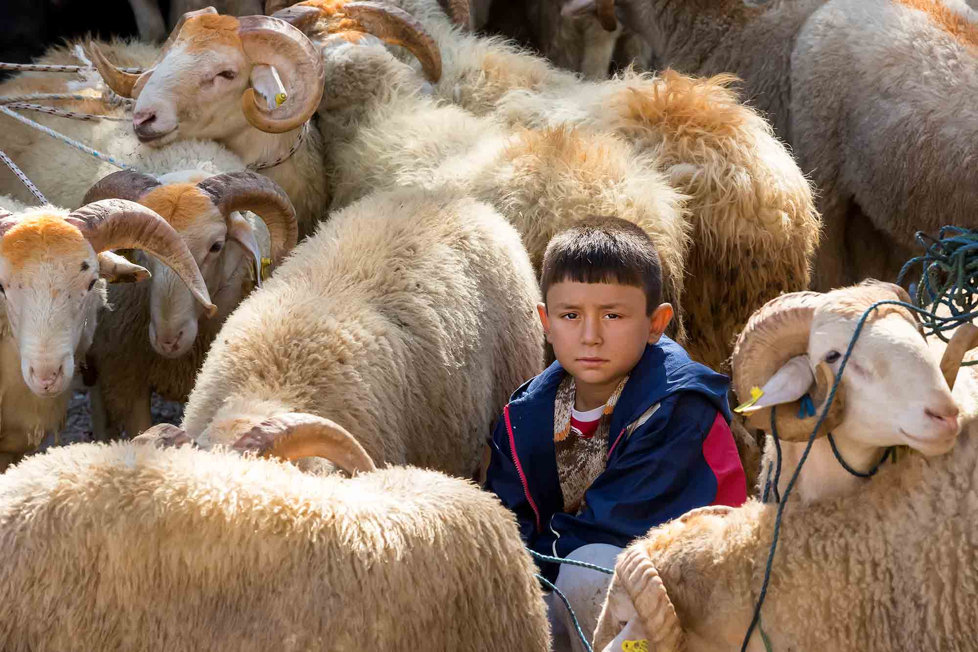 boy-sheep-market-bodrum-turkey