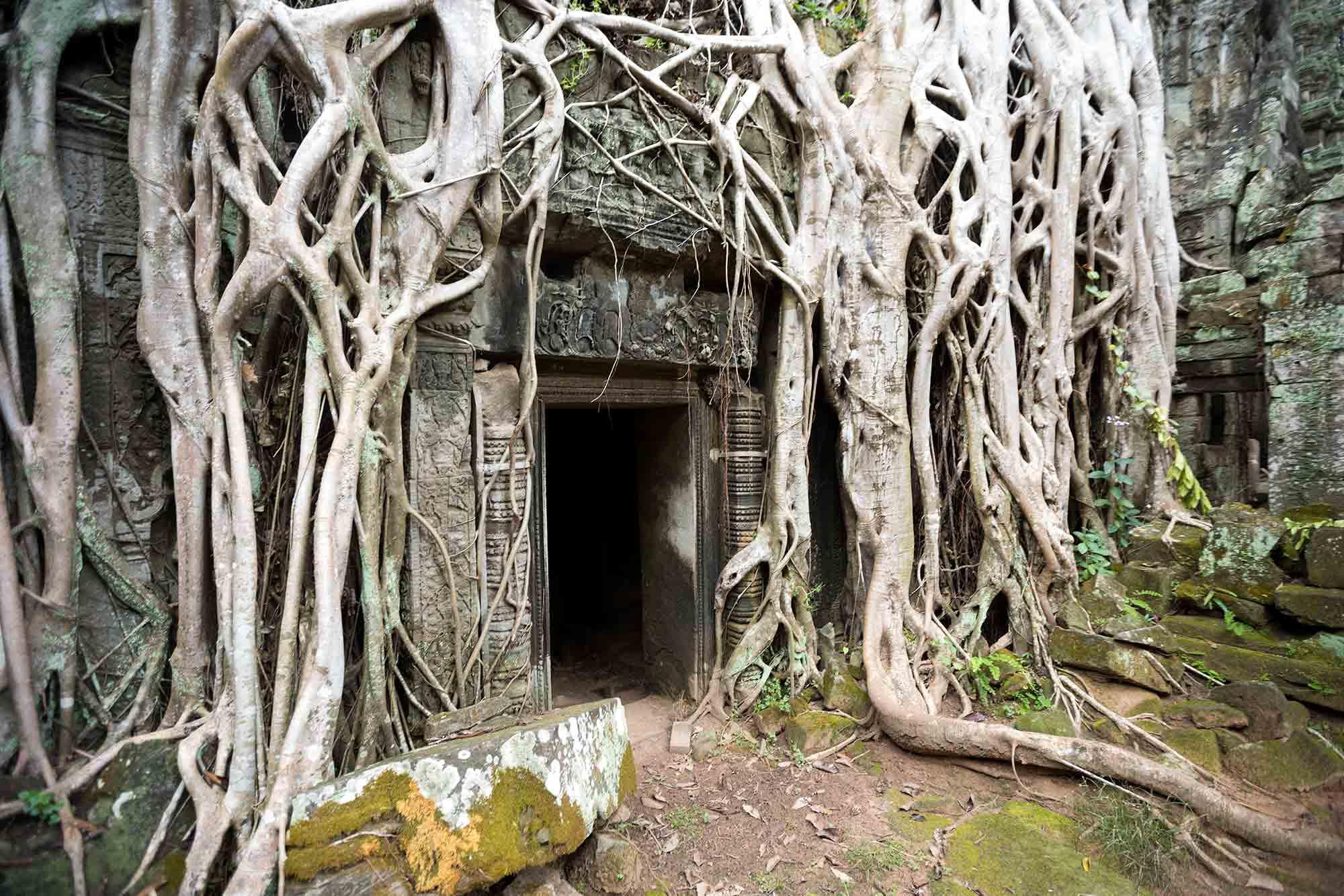 ta-Prohm-temple-angkor-wat-cambodia