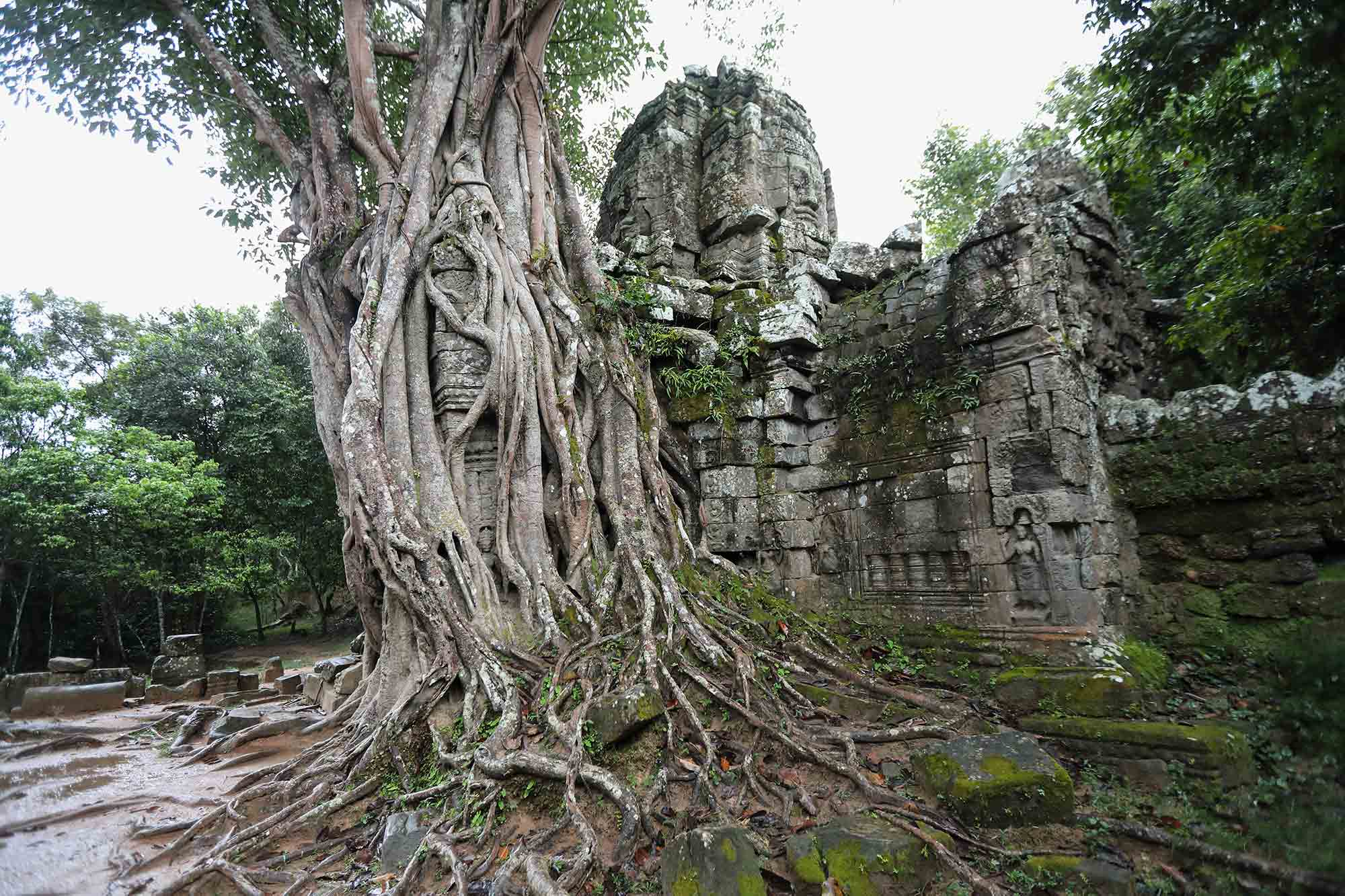 Ta Som temple is not as well known as it's bigger brother Ta Prohm, but it's gateway, which has been overtaken by fig trees is probably the most impressive one in all of Angkor Wat. © ULLI MAIER & NISA MAIER