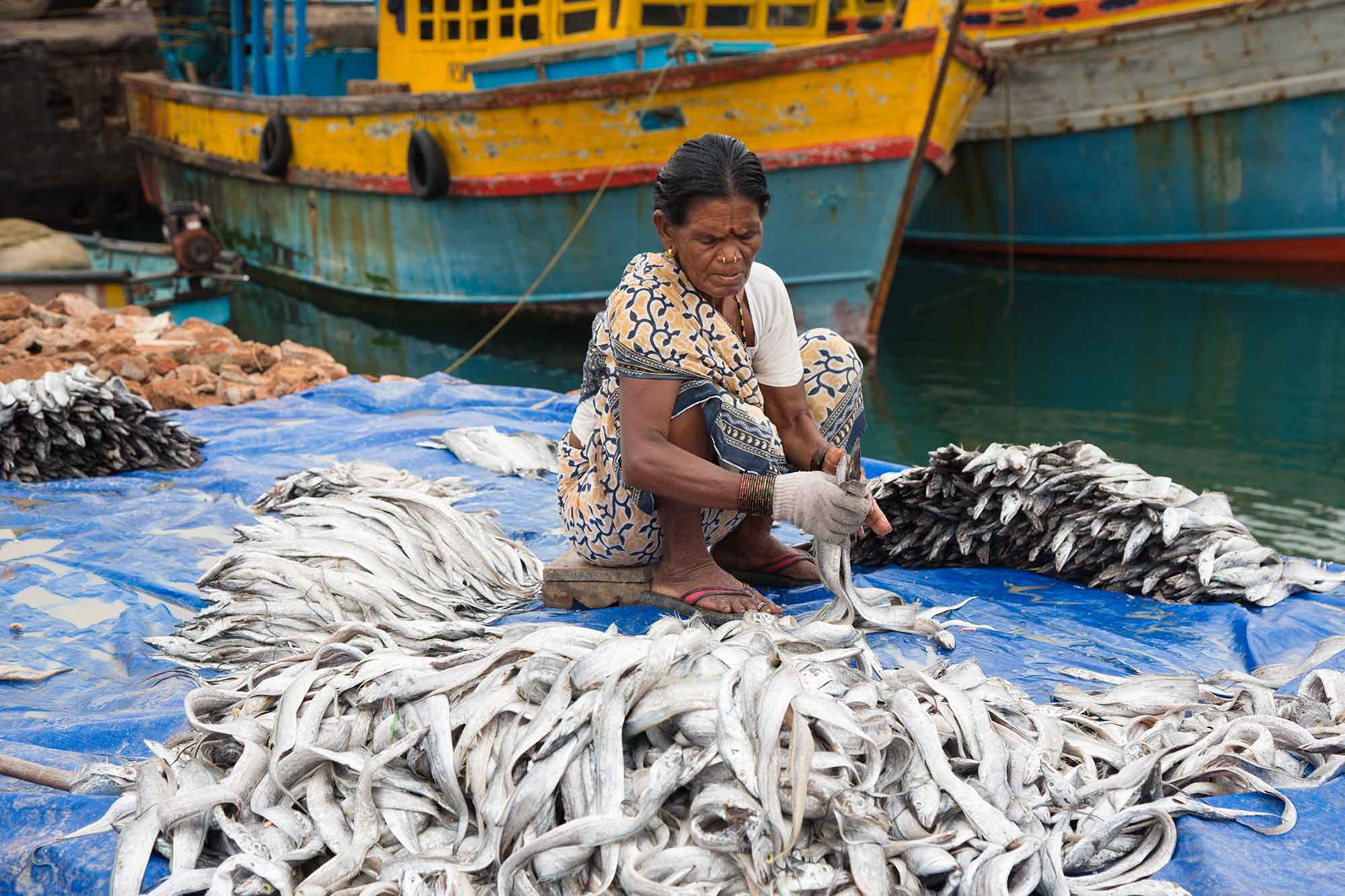 woman-fish-market-harbour-visakhapatnam-india